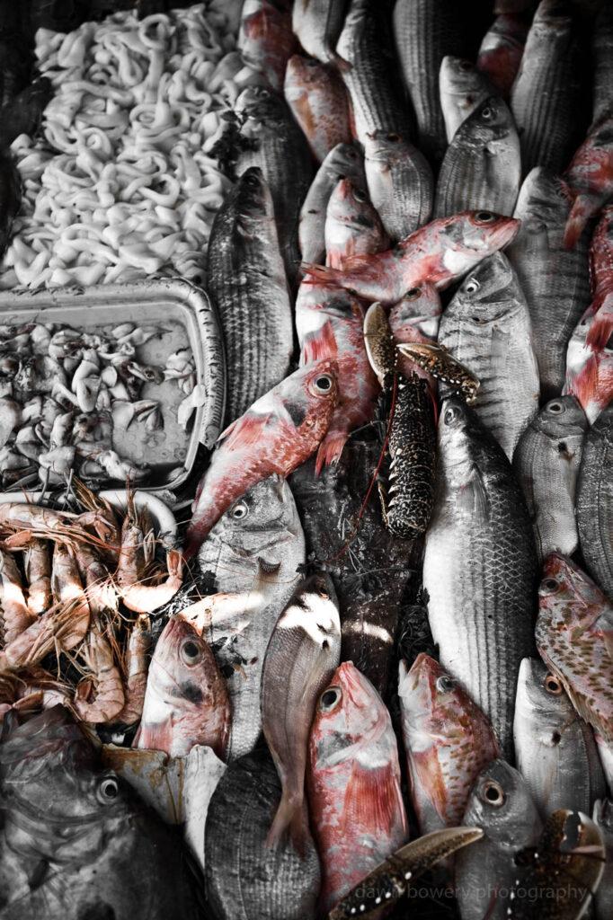morocco essaouira seafood fine art