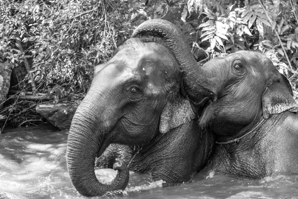 thailand chiang mai elephant sanctuary bathing